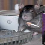 Șobolanii sunteți voi. Despre minciunile din spatele cărților de educație financiară